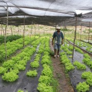 A ação facilita o crédito para agricultores que estão com dificuldades na comercialização (Foto: Paulo Rios)