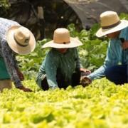 Entre os assuntos discutidos está a ciência 'alimentando' o Brasil, com ênfase na agropecuária.Foto: Acervo Secom/AL