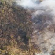 Chamas consumiram grande área em União dos Palmares (Foto: Divulgação/Corpo de Bombeiros)