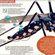 Mosquito modificado geneticamente pode ser a descoberta do combate ao aedes aegipty (Arte: correiobraziliense)