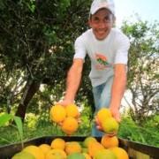 Seminário alagoano sobre fruticultura movimentará setor produtivo do Estado. Arquivo Secom