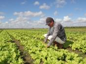 Agricultor comemora chuvas na região agreste