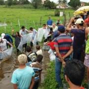 Alevinos vão beneficiar famílias de pequenos produtores rurais dos povoados de Massape e Santana, em Feira Grande.  Ascom Seagri
