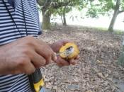 Levantamento para verificação da presença da praga do gorgulho da semente da manda foi determinado pelo Mapa.  Ascom Adeal