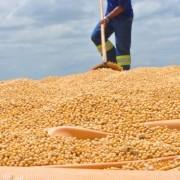 Plantio de soja em Alagoas vai passar de pouco mais de 350 hectares de 2017 para mais de mil hectares este ano; segundo Seagri, números podem ser ainda maiores.  Petrônio Viana