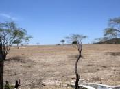 Encontro debateu trabalho preventivo para a convivência com a estiagem e a desertificação Fotos: Adailson Calheiros e Ascom Semarh